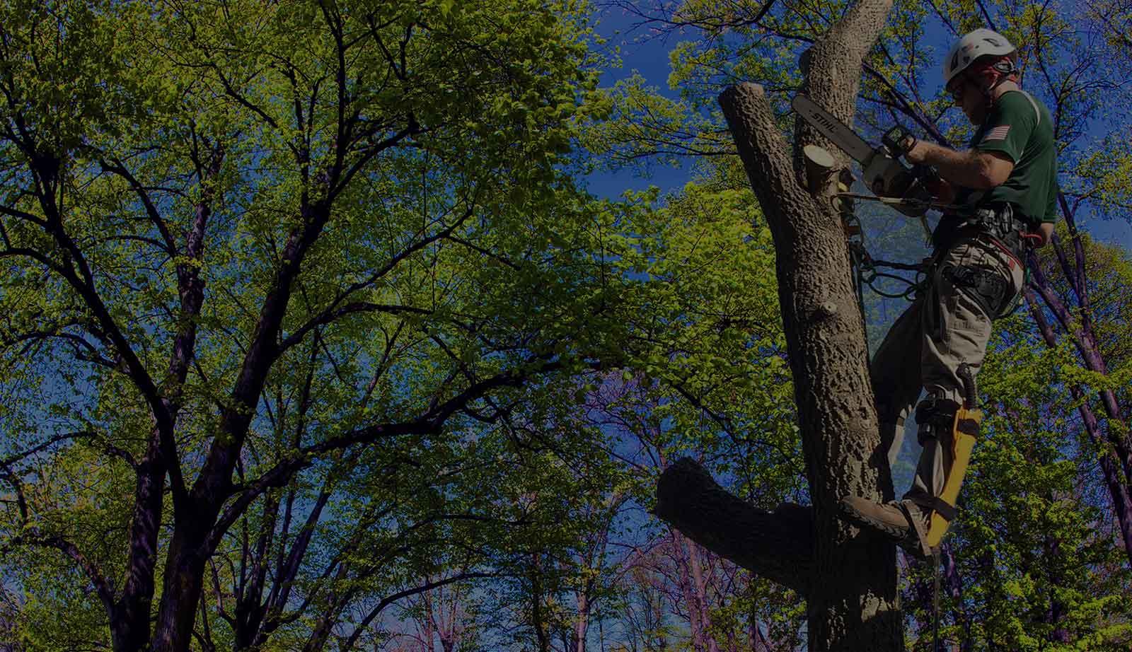 Cincinnati's Arboriculture Specialists